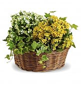 Plants: Basket of Joy