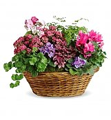 Plants: Simply Chic Plant Basket